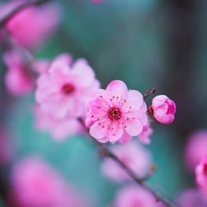 [クロスステッチ刺繡] 桃の枝