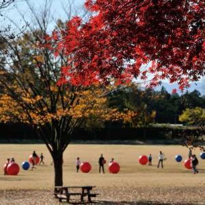 秋の自然を楽しむ3密回避の屋外デートで婚活カップルは愛を深めよう