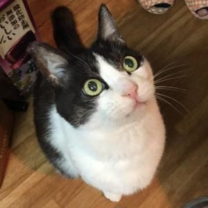 猫旅リポート 福士蒼汰、猫ナナ主演