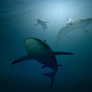 サメたっぷりのシャーク・マンス