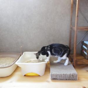 洗剤不要でアンモニア臭が消える!猫トイレの掃除にはクエン酸が最強