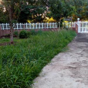 雨季に入り、庭の草木が ジャングル化 してきました。