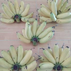 我が家の庭で、採れたバナナ。