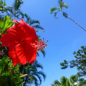 小浜島のリゾート『はいむるぶし』が家族旅行に最高だった!