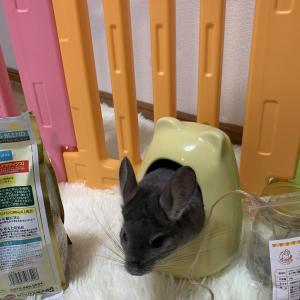 【ちきた日記27日目(チンチラ)】