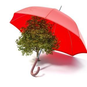 外構計画で植栽はどんな樹木を植えたらいいか?