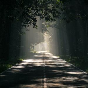 植栽の影が空間を何倍も魅力的にするという話