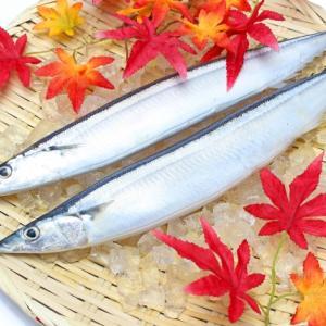 売り場で一番おいしい秋刀魚の選び方を解説!足が早いので鮮度が重要!