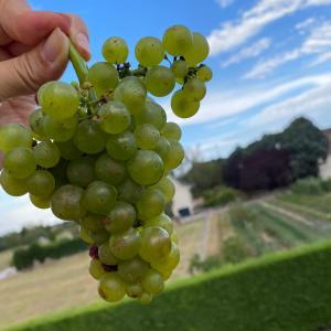 ブルゴーニュのブドウ畑は、みんなのブドウ畑だった件