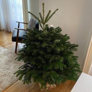 クリスマスを盛大に祝う国・フランスで、クリスマスツリーを買った話