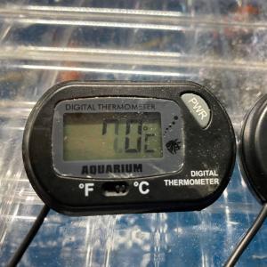 中華製温度計のその後。