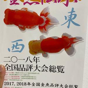 金魚伝承とつばき日和