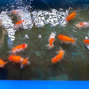 種魚さんたちの生活