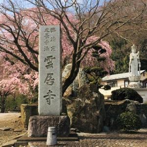 雲居寺 樹齢250年の枝垂れ桜&相模原の桜並木☆