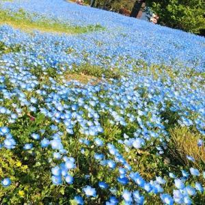 春のお花&よもぎ餅☆