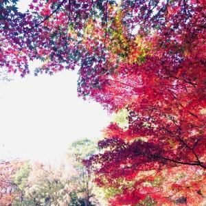 立川 昭和記念公園の紅葉☆