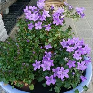 庭に咲く花達