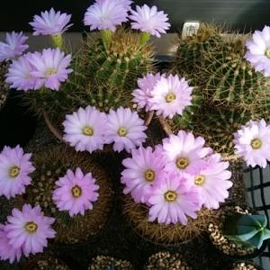 紫盛丸のお花畑やー
