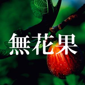 【名前・漢字の由来】いちじくの花はどこに咲く?【無花果】
