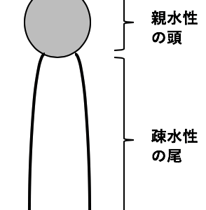 【生物】生体膜とタンパク質