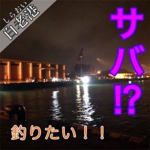 8月10日 白老港 でっかいサバを炭火で焼きたいんじゃ