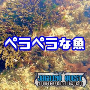 3月9日 小樽 ニシンはもういいカレイがいい