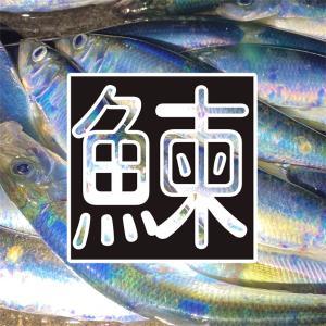 12月4日 小樽 ニシン釣り