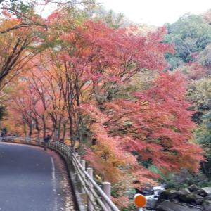 紅葉ドライブ ~豪渓