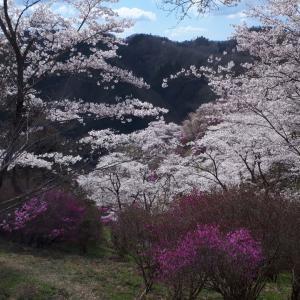 花見ドライブ   ~三休公園