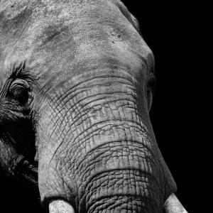 タイ・アユタヤで象乗りを止めたほうが良い理由