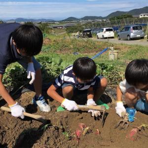 親子で芋ほりを楽しむなら滋賀県のアグリパーク竜王へ!
