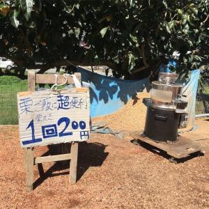関西で栗拾いするなら丹波篠山にある森口農園へ行こう!