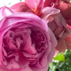 ついに咲いたプリティジェシカ&今咲いてるバラ♪   コスメの収納&メンテナンス♪
