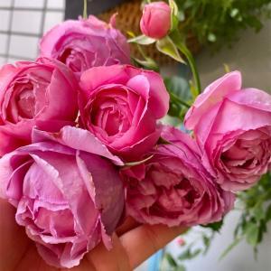 手のひらにのせてバラの花のサイズ比較♪