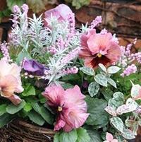 パンジーの寄せ植えと素敵な花屋さん