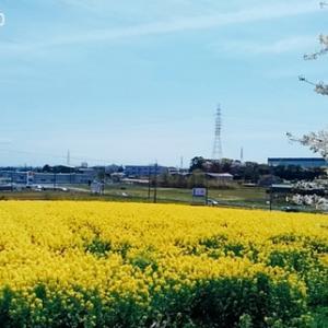 春の名残に・・・【みよし市】