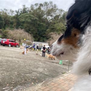 横浜安達警察犬訓練所のしつけ教室見学に行ってきました。