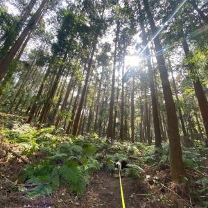 三保市民の森でジャングル体験!