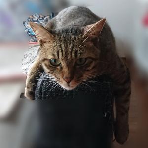 【人気】猫動画を集めてみた♪【癒し】
