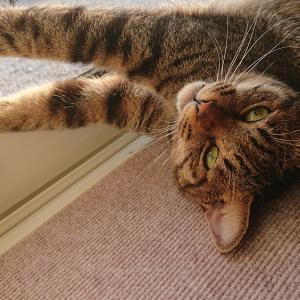 猫の爪切り、みんなはどうしてるの?