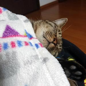 猫ちゃんが恋しくなる寒さ