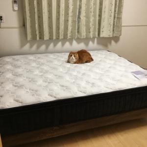 カゲトラ ベッドを新調する