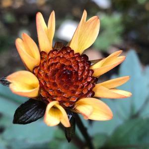 毎日植物を観察していると愛着ハンパない。それが庭いじりの楽しさなのね!