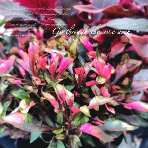 深みのある秋色の花壇に憧れて