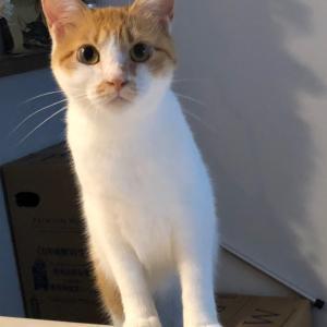 虹の橋を渡った保護猫のお話。〜あれから1年後のおはなし