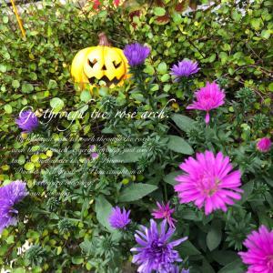 ハロウィン(風)玄関先のお花たち!