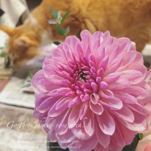 念願の、庭の花材でアレンジメント!