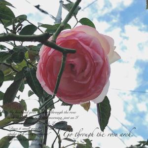 バラのアーチを見上げれば一輪のピエールくん