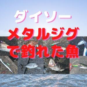 ダイソーのメタルジグで釣れた魚たち