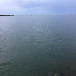 2020年9月6日深日港の様子
